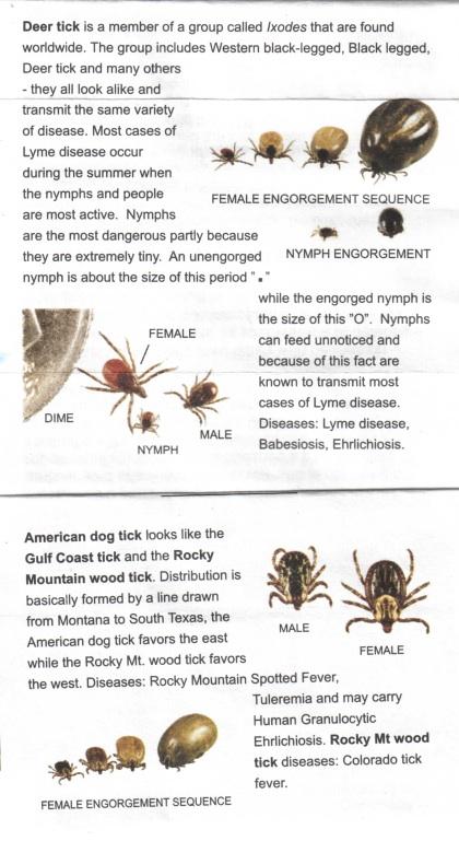 Tick Info Sheet