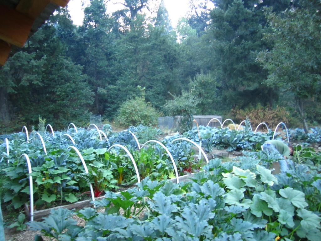Garden Beds Compost